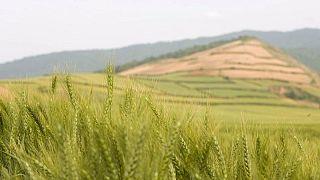 مصادر: إيران تشتري كميات قياسية من القمح بعد أسوأ جفاف في 50 عاما